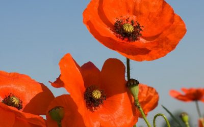 ANZAC DAY CLOSURE 2021